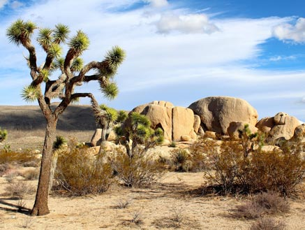 3º dia - Los Angeles - Palm Springs - Joshua Tree - Laughlin (560 km - 6hs)